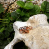 NEW - Real Honey Bee Infinity Pendant