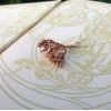 NEW - Real Organic Flowering Shrub Pendant