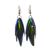BESTSELLER - Beetle Earrings